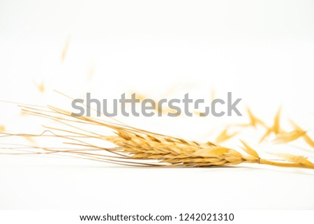 Dry wheat without seeds, dry plant on a pile with spikes on a white background. Digestive and healthy food. #1242021310