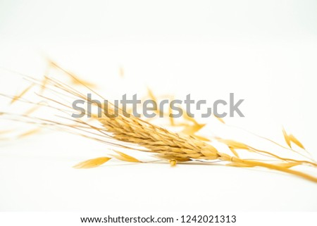 Dry wheat without seeds, dry plant on a pile with spikes on a white background. Digestive and healthy food. #1242021313