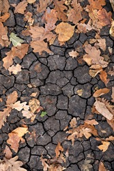 Dry yellow and orange leaves on the cracked ground. Grungy arid land texture. Drought land. Grey cracked ground surface. Autumn leaves on the ground. Dry desert ground. Top view and close-up picture.