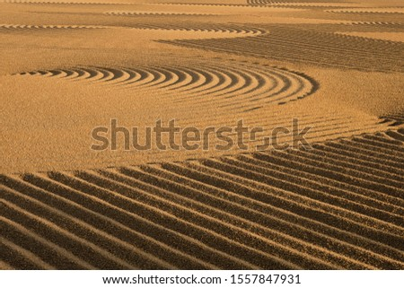 Dryed wheat under the sunlight