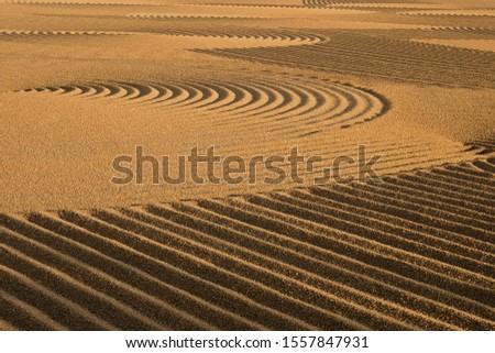 Dryed wheat under the sunlight #1557847931