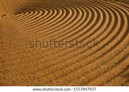 Dryed wheat under the sunlight #1557847937