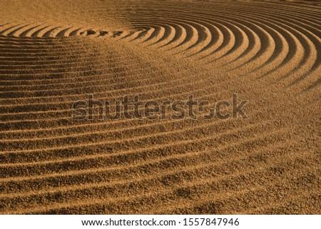 Dryed wheat under the sunlight #1557847946