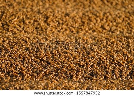 Dryed wheat under the sunlight #1557847952