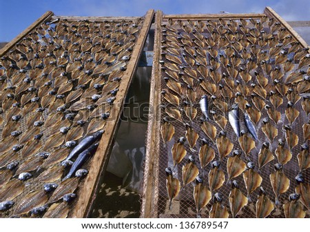 Drying stockfish at a small village called Nazare in Portugal