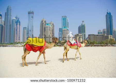 Dubai Camel on the town scape background, United Arab Emirates