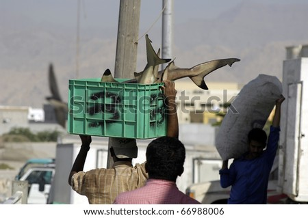 DUBAI, UAE - NOV 15: Fisherman sells fresh fish at the daily fishmarket on Nov 15, 2010 in Ras al Khaimah near Dubai, United Arab Emirates.