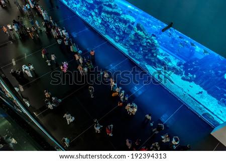 DUBAI, UAE - NOVEMBER 14: Aquarium in Dubai Mall - world\'s largest shopping mall , Downtown Burj Dubai November 14, 2012 in Dubai, United Arab Emirates