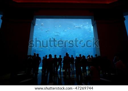 DUBAI, UNITED ARAB EMIRATES - SEPTEMBER 11: Visitors watching the aquarium in the Atlantis Hotel on the Jumeirah Palm island on September 10, 2009 in Dubai, United Arab Emirates - stock photo