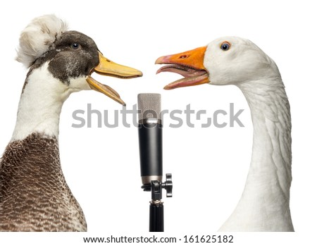 Duck and goose singing into a microphone, isolated on white #161625182