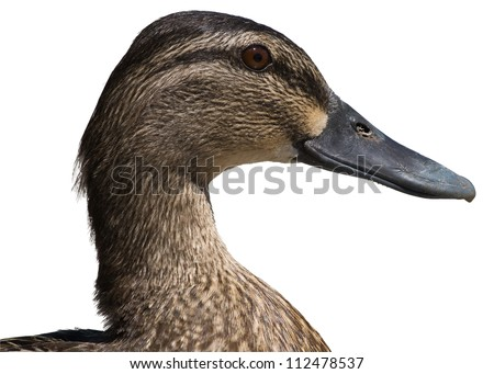 Duck head and beak isolated on a white background.