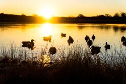 Duck hunting scenes