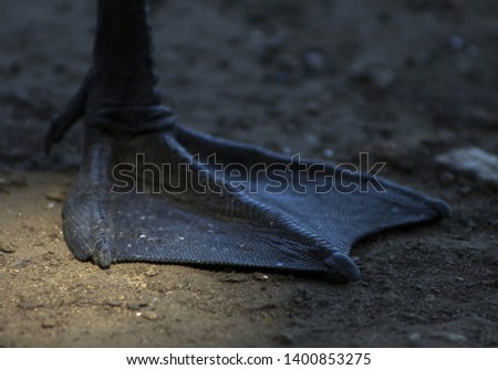 Duck leg closeup. Membranes closeup #1400853275