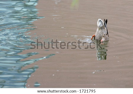 Duck playing on a bright summer day