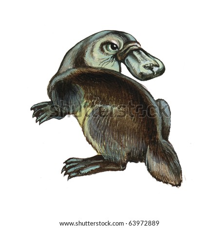 Duckbilled or Platypus - stock photo