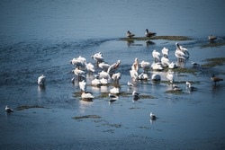 Ducks and various birds float along the Missouri River