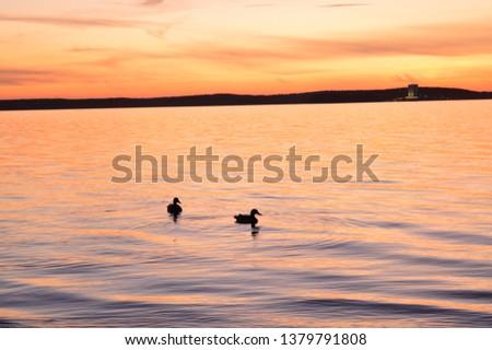 Ducks at sunset. Sunset. Sunset on sea. Nature paints