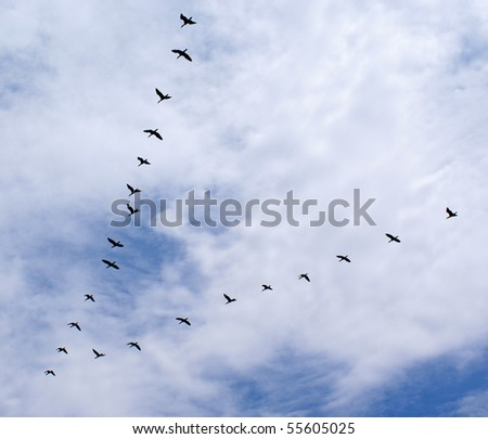 Ducks flying in a triangle formation - stock photo