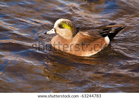 Ducks In Boulder Creek