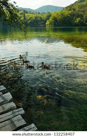 Ducks on the Plitvice Lakes in Croatia