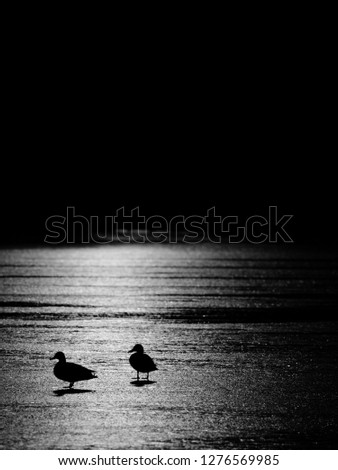 Ducks outlines. Ice cover is melting under the warm sun with bright rays reflecting in the frozen water. #1276569985