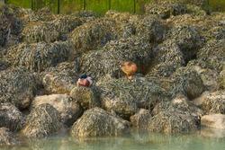 Ducks sitting on the rocks green sunlight reflecting in glittering sea.