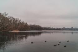 ducks swim on ice in winter