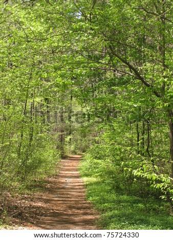 Duke Forest trail, Durham, NC