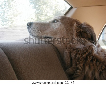 Duke in car.