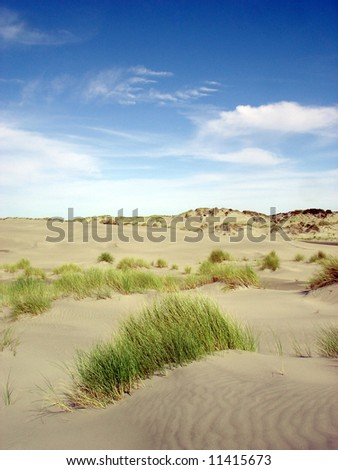 Dune and grass