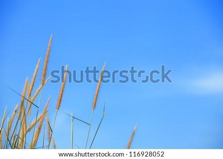 Dune Grass and Blue Sky