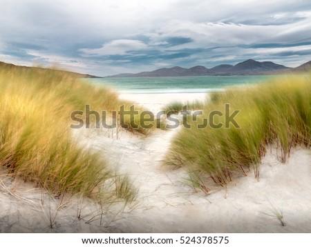 Dune grass at the white beach #524378575