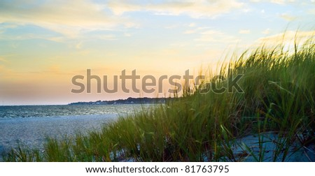 Dune grass on a beach blowing in the wind.