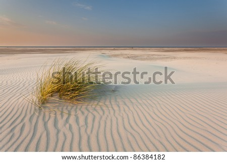 Dune-grass on the beach