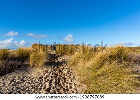 Dune landscape in Bergen aan Zee, Noord-Holland, The Netherlands, Europe Stockfoto ©