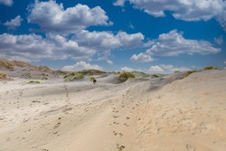 Dune landscape with a gentle slope of drifting sand rising to the top of the dune with here and there groups of dune grass against a background of blue sky with Dutch clouds sky and a German Shepherd