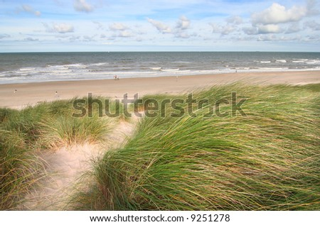 Dunes and beach in spring