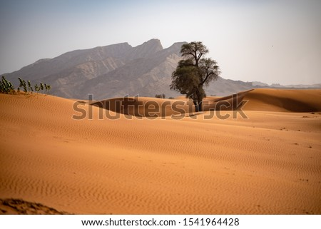 Dunes and rocks of Sharjah Emirate. United Arab Emirates. Mleiha.