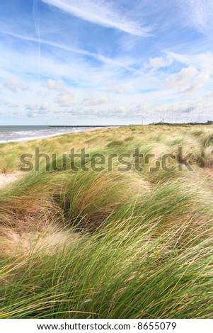 Dunes and the beach in spring