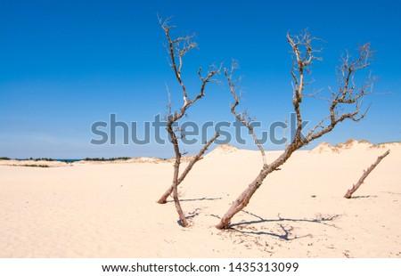 Dunes in Slowinski National Park (Polish: Słowiński Park Narodowy), called Leba desert, Poland Zdjęcia stock ©