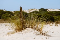 Dunes in the Doñana National Park, Andalusia, Spain.