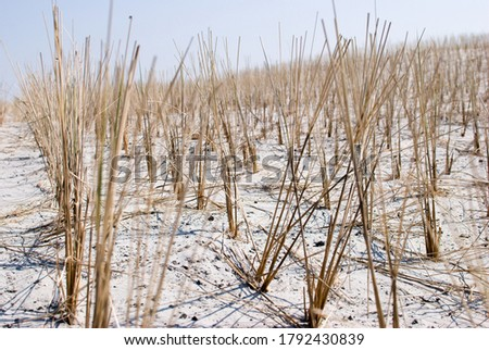 dunes in the nature reserve on the north sea beach Stock photo ©