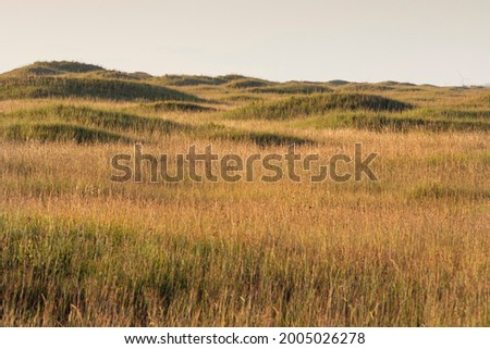 Dunes on Padre Island National Seashore Foto stock ©