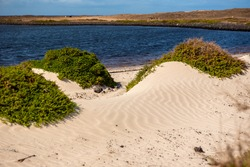 Dunes on the Fuerteventura Nature Trail GR 131 from Corralejo to Morro Jable in summer 2020.
