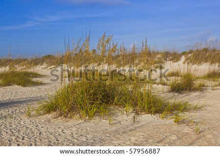 dunes with grass at fine sandy beach without people
