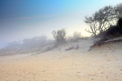 Dunes with trees in the mist