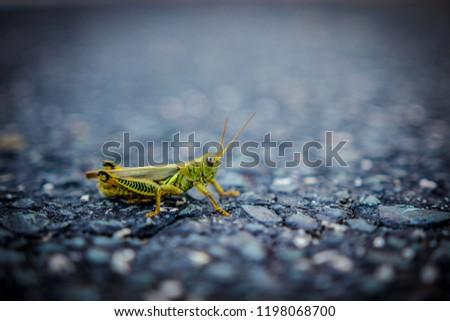 Durham, North Carolina / United States - October 4, 2018: Green Grasshopper #1198068700