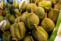 Durian fruit is placed in a basket for sale to the buyer in fruit market,Thailand.Durian that is known as the king of fruits of Thailand.