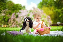 During the picnic, the kid treats the pet dog Cavalier King Charles Spaniel with a croissant