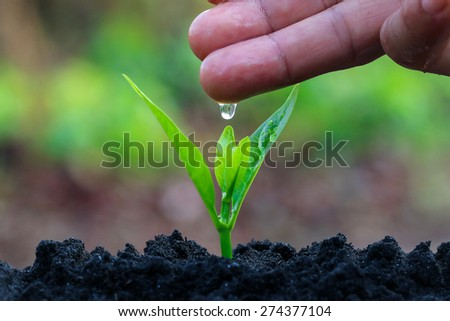 During the tree planting with seedlings and watering. Keep trees healthy When added, would help reduce global warming.